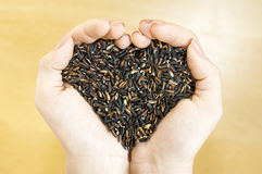 Lovely black jasmine rice Royalty Free Stock Photos