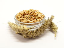 Grain in bowl with ears Stock Image