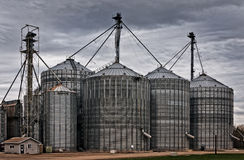 Grain brain Stock Images