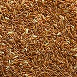Grain brown rice. On background stock image