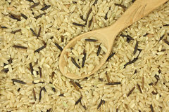 Grain brown and wild rice in a wooden spoon Stock Photo