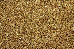Grain buckwheat Royalty Free Stock Photos