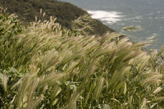 Grain by the coast Royalty Free Stock Photo
