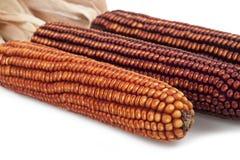 Grain cobs  Stock Photos