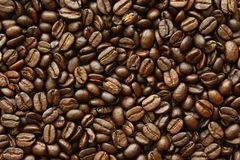 Grain coffee. Picture of the species arabica beans royalty free stock photos