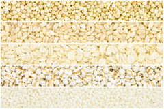 Grain collection Stock Images
