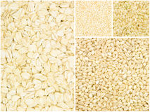 Grain collection Royalty Free Stock Photography