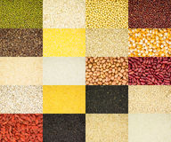 Grain collection Royalty Free Stock Photo
