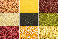 Grain collection Royalty Free Stock Photos