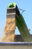 Grain Royalty Free Stock Photos