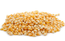 Grain of corn Stock Photo