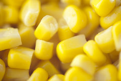 Grain of corn Royalty Free Stock Photos