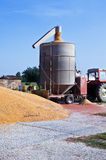 Grain of corn Stock Images