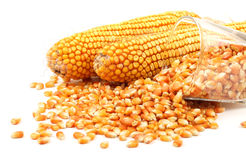 Grain corn Royalty Free Stock Image
