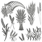 Grain, corn, design elements Royalty Free Stock Photos