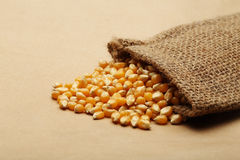 The grain corn in small sack Stock Images