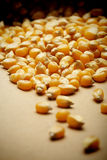 The grain corn in small sack Stock Photo