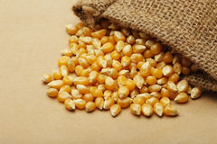 The grain corn in small sack Stock Image