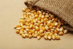 The grain corn in small sack Stock Image