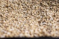 Grain d'orge La vue à partir du dessus Produit pour la production de bière Photographie stock libre de droits