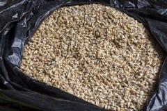 Grain d'orge La vue à partir du dessus Produit pour la production de bière Images stock