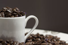 Grain de café Images libres de droits
