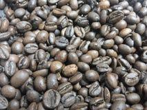 Grain de café de couleur brune Photographie stock libre de droits