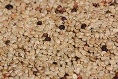Grain de café frais Image stock