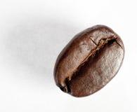 Grain de café rôti d'isolement Images libres de droits