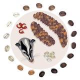 Grain de café rôti différent avec le chat de civette Image stock