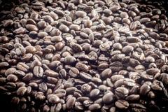 Grain de café sur le fond blanc photos libres de droits