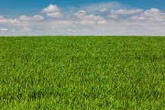 Grain de champ Photographie stock
