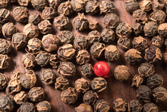 Grain de poivre rouge simple en grains de poivre secs d'un poivre noir Photographie stock libre de droits