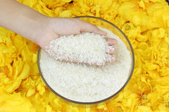 Grain de riz dans des mains Image stock
