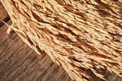 Grain de riz de jasmin de paddy sur le fond en bois Photographie stock