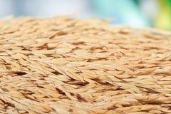 Grain de riz de jasmin de paddy sur le fond en bois Photo stock