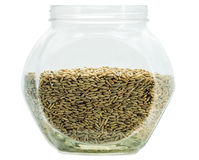 Grain de Rye Photo stock
