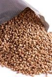 Grain de sarrasin Petit grain Fond blanc image stock