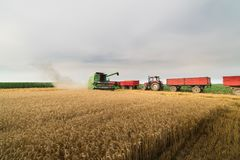 Grain de versement de maïs dans la remorque de tracteur après récolte Photographie stock