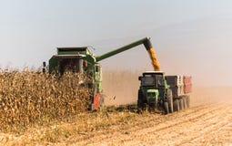 Grain de versement de maïs dans la remorque de tracteur après récolte image stock