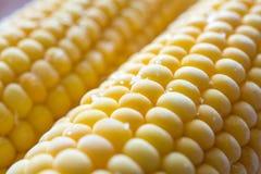 Grain du maïs frais couvert par le hoar image stock