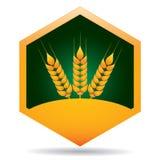 Grain ears Stock Image