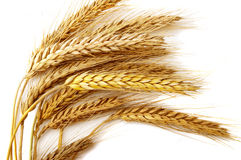 Grain ears Stock Photography