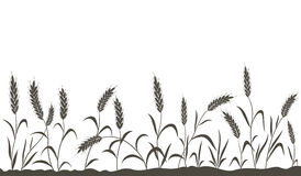 Grain ears. Royalty Free Stock Images