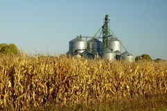Grain Elevator. A grain elevator towers above a corn field  in South Dakota Stock Image