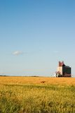 Grain elevator and wheat field Stock Image