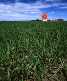 Grain elevator in young, green wheat field Royalty Free Stock Images