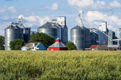 Grain elevators and silos with wheat Stock Photography