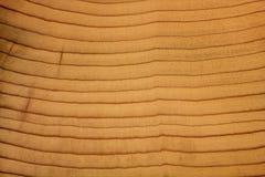 Grain en bois Photo stock