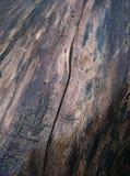 Grain en bois humide photo libre de droits